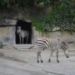 Wycieczka do zoo, która zamieniła się w smutny, chiński horror.
