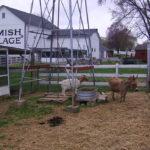 Dawno temu w … Ameryce. Lancaster County i Amisze.