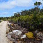 Te Araroa – pieszo przez Nową Zelandię. Część 2: Omahuta Road (Mangamuka) – Puketi Campsite (ok. 37 km) oraz święta w Kerikeri.